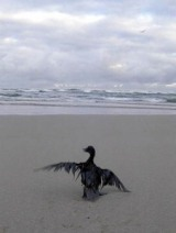 aves5.jpg